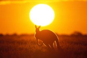 Tech Companies Give Aid Amidst Australian Bushfire Crisis