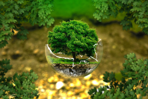 Environmental Solutions and Innovations with SAP